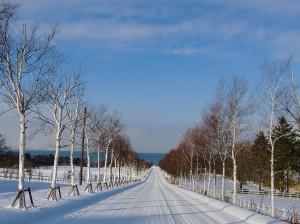 パノラマロード冬
