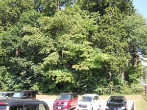 七重官園のヒノキ林
